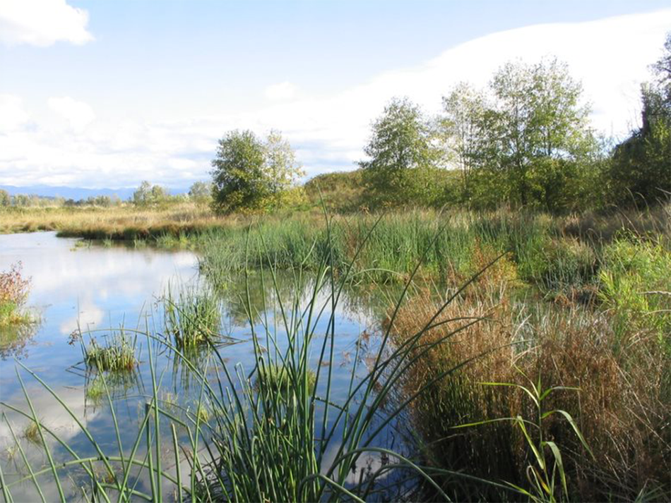 A photo of Fairview headwaters featuring clean waters, native trees and thriving reeds.